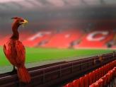 Afbeelding bij Verslag: Liverpool fc - West Ham United